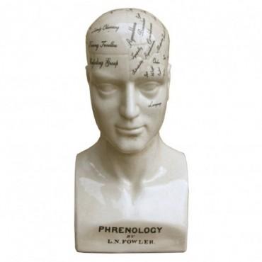 Sculpture phrénologie cerveau en céramique 42 cm