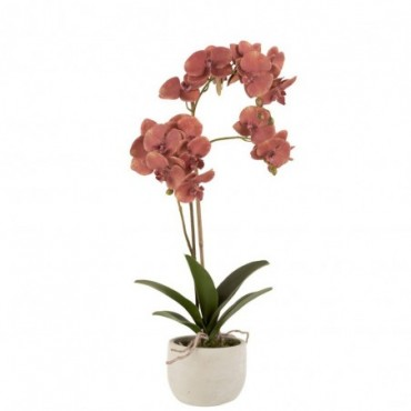 Orchidee + Pot Plastique-Ciment Rouge Foncé-Beige