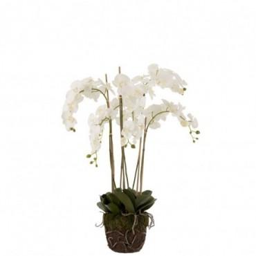 Orchidee En Terre Plastique Blanc-Vert Extra L