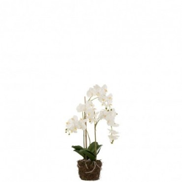 Orchidee En Terre Plastique Blanc-Vert L