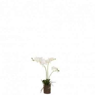 Orchidee En Terre Plastique Blanc-Vert M