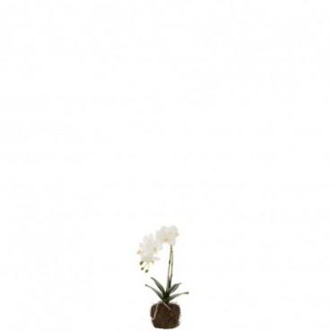 Orchidee En Terre Plastique Blanc-Vert S