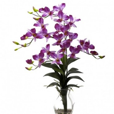 Dendrobium Bigibbum Violet