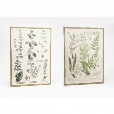 Toile Plante Botanique 2D 50X70