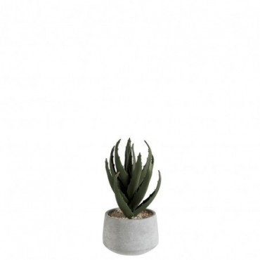 Aloe vera pot vert viment
