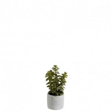 Succulente pot vert mix ciment