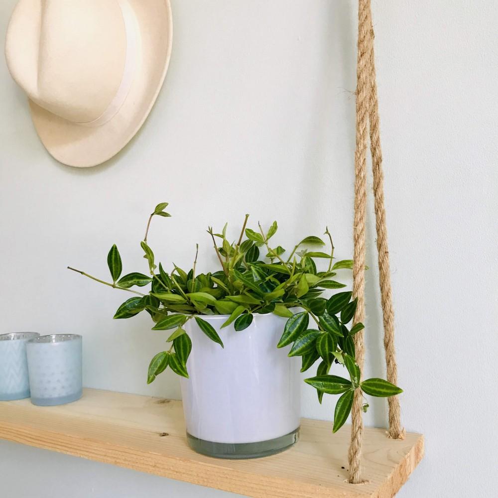 Plante Exterieur Qui Aime L Eau peperomia angulata rocca verde | achat sur plante ta deco