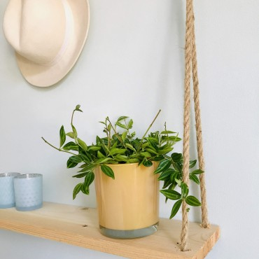 Peperomia Angulata Rocca Verde