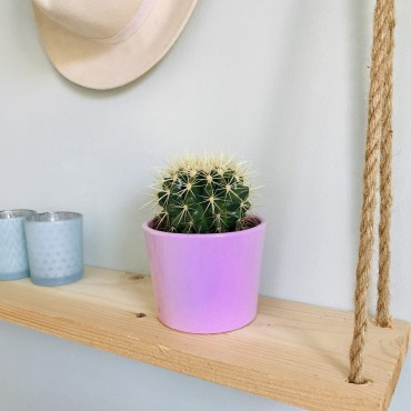 Echinocactus Grusonii - Coussin de belle-mère