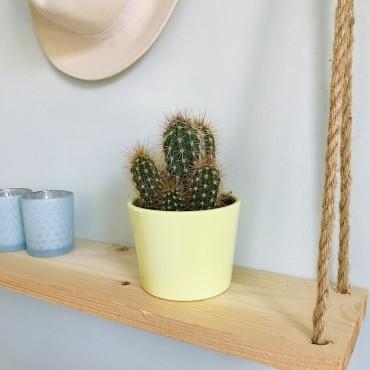Cactus Cereus Skyline - Cierge du Pérou