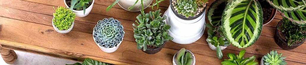 Ambiances et inspiration pour votre décoration : Plante-Ta-Deco.com
