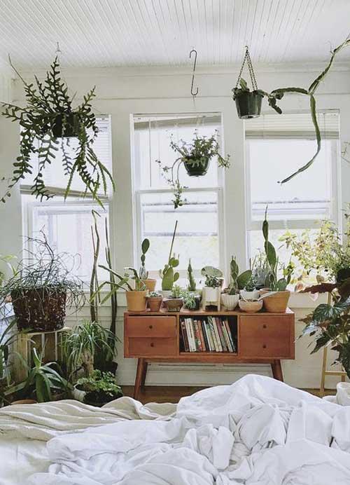 plantes suspendues interieur