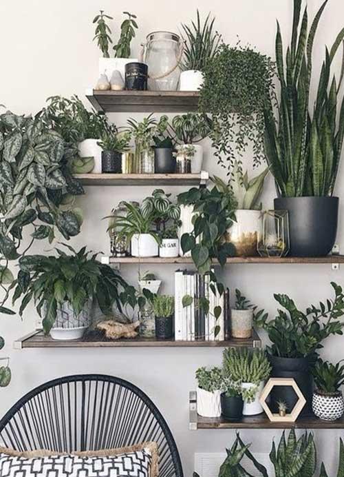 etagere plantes